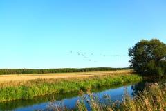 Άποψη του κοπαδιού των πουλιών στο μπλε ουρανό Στοκ Εικόνες