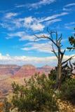 Άποψη του μεγάλου φαραγγιού στις ΗΠΑ με πολύ το μπλε ουρανό και πλαισιωμένος από το νεκρό δέντρο με τους δραματικούς κλάδους - εκ στοκ φωτογραφίες με δικαίωμα ελεύθερης χρήσης