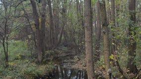 Άποψη του μικρού ποταμού στο δάσος απόθεμα βίντεο