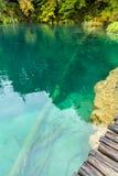 Άποψη του ξύλινου δαπέδου, δασική λίμνη με το διαφανές τυρκουάζ Στοκ φωτογραφία με δικαίωμα ελεύθερης χρήσης