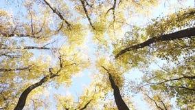 Άποψη του ουρανού μέσω των κορωνών των δέντρων απόθεμα βίντεο