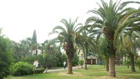 Άποψη του πάρκου με τους φοίνικες στο κέντρο της πόλης 4K φιλμ μικρού μήκους