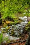 Άποψη του πετρώδους ποταμού με τους μικρούς καταρράκτες στο δασικό αλσύλλιο Στοκ Φωτογραφία