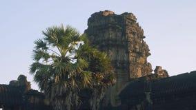 Άποψη του πιθήκου στις καταστροφές του ναού Angkor Wat στα ξημερώματα απόθεμα βίντεο