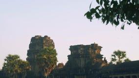 Άποψη του πιθήκου στις καταστροφές του ναού Angkor Wat στα ξημερώματα φιλμ μικρού μήκους