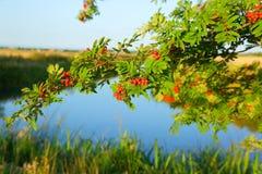 Άποψη του ποταμού μέσω των κλάδων των δέντρων Στοκ εικόνες με δικαίωμα ελεύθερης χρήσης