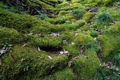 Άποψη του πολύβλαστου πράσινου βρύου, της λειχήνας, του φυτού, των δέντρων και των ξηρών φύλλων ι Στοκ Φωτογραφίες
