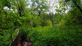 Άποψη του πράσινου δασικού εσωτερικού στην ημέρα πολύβλαστες δέντρα, φυτά, και πρασινάδα φύλλων κάτω από το θόλο φιλμ μικρού μήκους