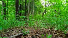 Άποψη του πράσινου δασικού εσωτερικού στην ημέρα Πολύβλαστες δέντρα, φυτά, και πρασινάδα φύλλων κάτω από τη δασώδη περιοχή φιλμ μικρού μήκους