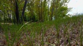 Άποψη του πράσινου δασικού πατώματος, της μακριάς χλόης, και των εγκαταστάσεων Επάνω-στενή πολύβλαστη πρασινάδα κάτω από το θόλο  απόθεμα βίντεο