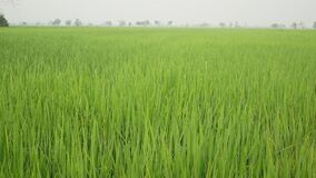 άποψη του ρυζιού φιλμ μικρού μήκους