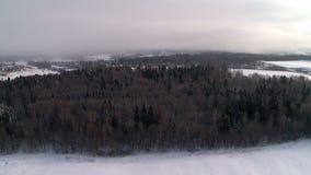 Άποψη του χειμερινού δάσους από το μπαλόνι ζεστού αέρα απόθεμα βίντεο