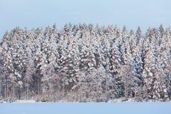 Άποψη του χιονώδους δάσους στο χειμώνα Στοκ φωτογραφία με δικαίωμα ελεύθερης χρήσης