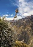 Άποψη του Cruz Del Condor, φαράγγι Colca, Arequipa, Περού, νότος Α Στοκ Εικόνες