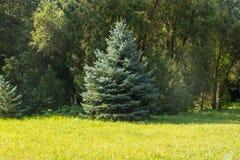 Άποψη του dendrological κήπου στην επιφύλαξη askania-Nova, Ουκρανία Στοκ εικόνες με δικαίωμα ελεύθερης χρήσης