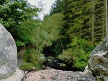 Άποψη του Forrest που πλαισιώνεται από τον πέτρινο τοίχο στοκ φωτογραφίες