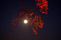 Άποψη του 20/01/19 supermoon πριν από τη σεληνιακή έκλειψη στοκ εικόνες