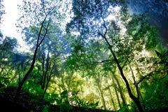 Άποψη τροπικών δασών από κάτω από Στοκ φωτογραφίες με δικαίωμα ελεύθερης χρήσης