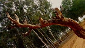 Άποψη των δέντρων στοκ φωτογραφίες