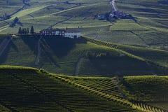 Άποψη των αμπελώνων στους Langa Piedmont λόφους στοκ εικόνα με δικαίωμα ελεύθερης χρήσης