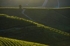 Άποψη των αμπελώνων στους Langa Piedmont λόφους στοκ φωτογραφίες