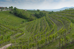 Άποψη των αμπελώνων Prosecco από Valdobbiadene, Ιταλία κατά τη διάρκεια του spri Στοκ Φωτογραφίες