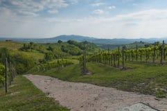 Άποψη των αμπελώνων Prosecco από Valdobbiadene, Ιταλία κατά τη διάρκεια του spri Στοκ Εικόνες