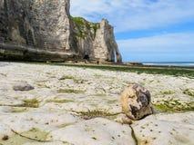 Άποψη των απότομων βράχων και της παραλίας σε μια χαμηλή παλίρροια Στοκ Φωτογραφία