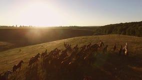 Άποψη των αλόγων από τον αέρα φιλμ μικρού μήκους
