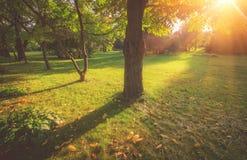 Άποψη των δέντρων στο πάρκο σε έναν χρόνο του φθινοπώρου Η σκιά του δέντρου μια ηλιόλουστη ημέρα Στοκ εικόνα με δικαίωμα ελεύθερης χρήσης