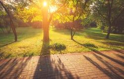 Άποψη των δέντρων στο πάρκο σε έναν χρόνο του φθινοπώρου Η σκιά του δέντρου μια ηλιόλουστη ημέρα Στοκ φωτογραφίες με δικαίωμα ελεύθερης χρήσης