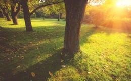 Άποψη των δέντρων στο πάρκο σε έναν χρόνο του φθινοπώρου Η σκιά του δέντρου μια ηλιόλουστη ημέρα Στοκ Εικόνα