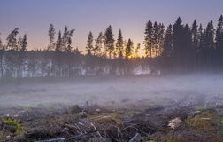 Άποψη των καταρριφθεισών δέντρων, των πετρών και των εμπλοκών στα περίχωρα του πρόσθιου μέρους πεύκων Στοκ φωτογραφίες με δικαίωμα ελεύθερης χρήσης