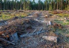 Άποψη των κούτσουρων των καταρριφθε'ντων δέντρων Στοκ Εικόνα