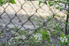 Άποψη των μικρών άσπρων άγριων λουλουδιών μέσω του πλέγματος στοκ φωτογραφία