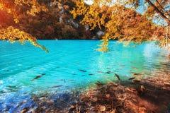 Άποψη των μπλε ψαριών στη λίμνη Nationa λιμνών Plitvice Στοκ Φωτογραφίες