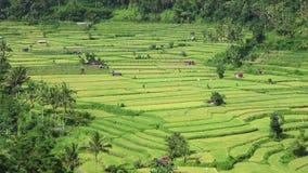 Άποψη των πεζουλιών ρυζιού απόθεμα βίντεο
