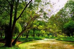 Άποψη των πράσινων δέντρων στο πάρκο Στοκ εικόνα με δικαίωμα ελεύθερης χρήσης
