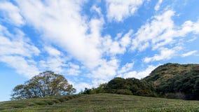 Άποψη των πράσινων νάνων εγκαταστάσεων και του δέντρου στον ιαπωνικό κήπο με Στοκ Εικόνες