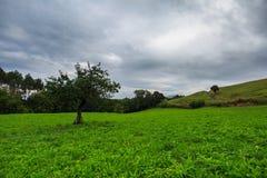Άποψη των πράσινων τομέων Laukiz, βασκική χώρα Στοκ Φωτογραφία