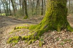 Πόδι δέντρων Στοκ Εικόνες