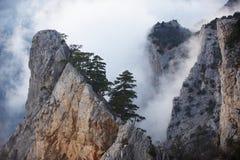 Άποψη των misty βουνών ομίχλης - βράχος με το δέντρο πεύκων Στοκ Εικόνες