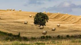 Άποψη των tuscan τομέων και των λόφων στην περιοχή Maremma στην Ιταλία Στοκ εικόνα με δικαίωμα ελεύθερης χρήσης