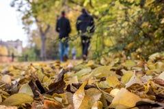 Άποψη φθινοπώρου ενός δρόμου στο πάρκο στοκ εικόνες με δικαίωμα ελεύθερης χρήσης