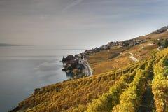 Άποψη φθινοπώρου πέρα από τη λίμνη Γενεύη από τις αμπέλους Lavaux στοκ εικόνες