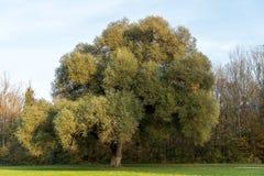 Άποψη φθινοπώρου στον αγγλικό κήπο, Μόναχο, Γερμανία στοκ εικόνα