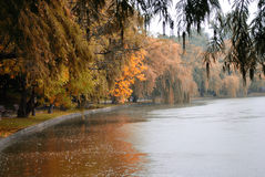 Άποψη φθινοπώρου της λίμνης, δέντρα στοκ εικόνες