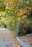 Άποψη φθινοπώρου του ίχνους στην όχθη ποταμού στοκ φωτογραφία με δικαίωμα ελεύθερης χρήσης