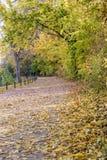 Άποψη φθινοπώρου του ίχνους στην όχθη ποταμού στοκ φωτογραφία