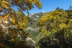Άποψη φθινοπώρου του λόφου αναθέματος στο βουνό Rhodopes από το φρούριο Asen ` s, Αζένοβγκραντ, Βουλγαρία Στοκ φωτογραφία με δικαίωμα ελεύθερης χρήσης